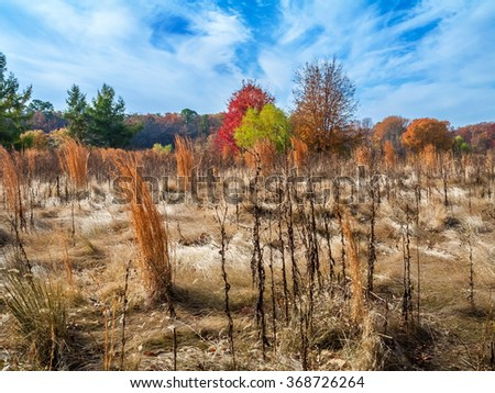 Colorful Autumn grasses and trees in this meadow in Central New Jersey, - stock photo