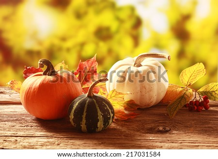 Colorful autumn harvest with an orange, variegated green and white pumpkin and squash amongst colorful fall leaves on a rustic wooden table in a golden autumnal garden with copyspace - stock photo