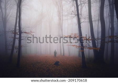colorful autumn in dark foggy forest - stock photo