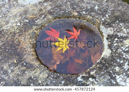 Colorful Autumn Japanese Maple leaf in stone basin, Kyoto, Japan. (Selective focus)