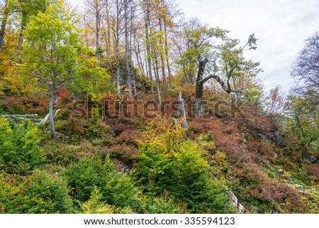 Colorful autumn landscape in the Caucasus mountains, near Sochi.