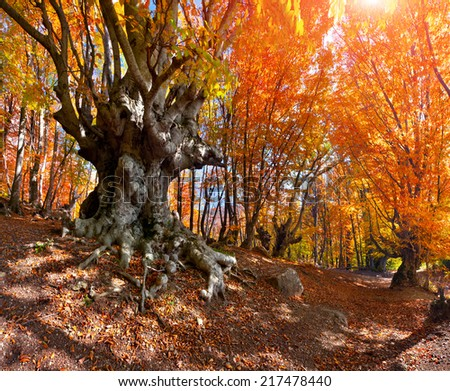 Colorful autumn landscape in the mountain forest - stock photo