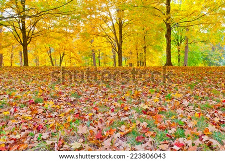Colorful autumn landscape, sunny day in park.  Bernheim Arboretum and Research Forest near Louisville, Kentucky, USA.