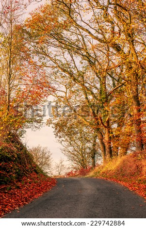 Colorful autumn landscape with a road - stock photo