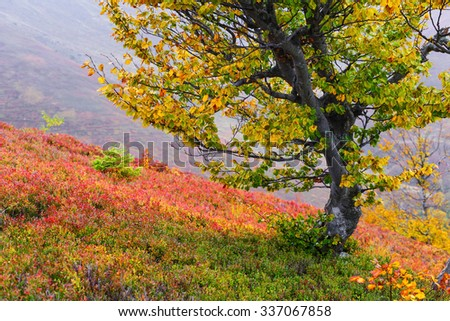 Colorful autumn landscape with curved tree on mountain slope