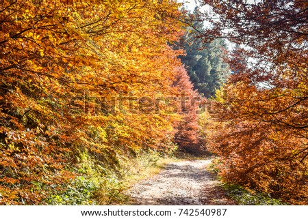 Colorful autumn landscape with leaves and a path in a forest