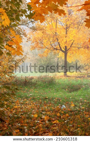 colorful autumn landscape with yellow trees and falling leaves, natural background - stock photo