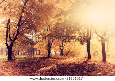 colorful autumn landscape with yellow trees and sun, natural background  with instagram effect - stock photo