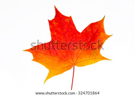 Colorful autumn leaf