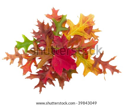 Colorful autumn leaf arrangement on white