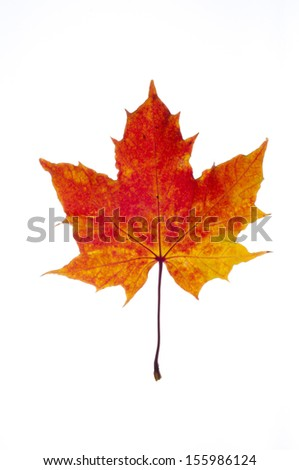 colorful autumn leaf of maple isolated on white - stock photo