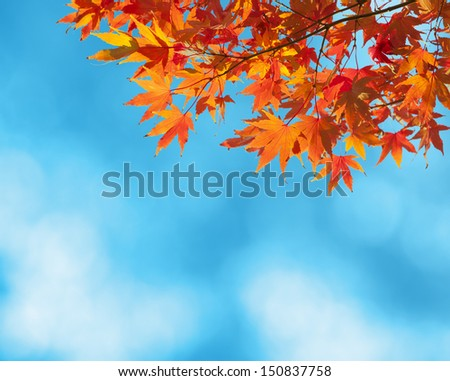 Colorful Autumn Leaves against blue sky - stock photo