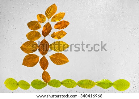 Colorful autumn leaves and raindrops on the window. Abstract tree arranged with beech autumn leaves stuck to the window raindrops highlighted on a gray background. - stock photo