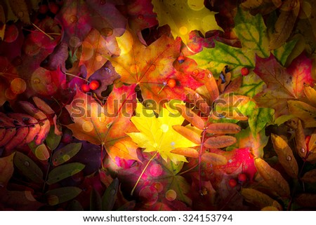 Colorful autumn leaves background. - stock photo