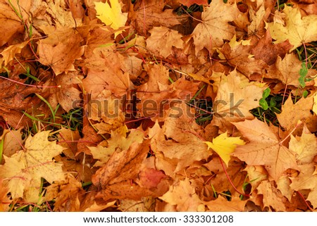 Colorful autumn leaves. Background from autumn leaves. colorful autumn background. - stock photo