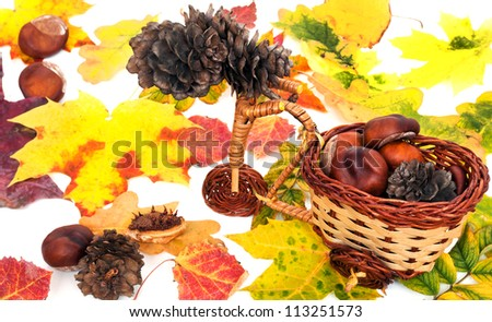 colorful autumn leaves, chestnuts and cones on white