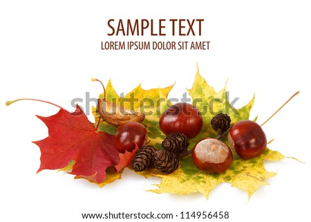 colorful autumn leaves, chestnuts and cones on white background