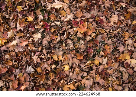 Colorful autumn leaves create wonderful warm background - stock photo