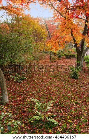 Colorful Autumn leaves in Kyoto Japan
