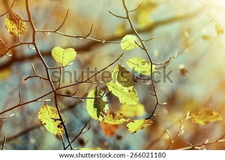 Colorful autumn leaves in November - stock photo