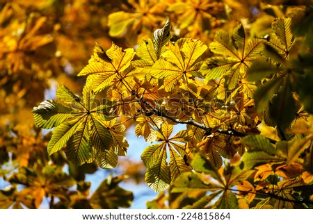 Colorful autumn leaves in october park, sunny weather