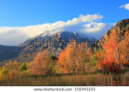 Colorful autumn leaves in the Wasatch Mountains, Utah, USA.