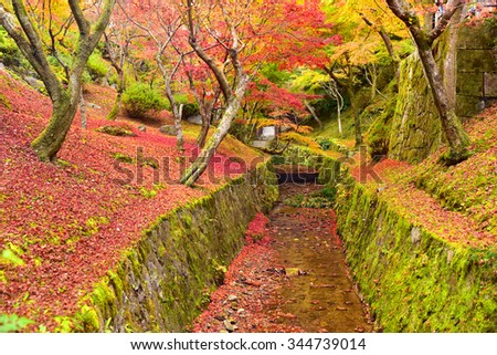 Colorful autumn leaves in Tofukuji Temple, Kyoto Japan