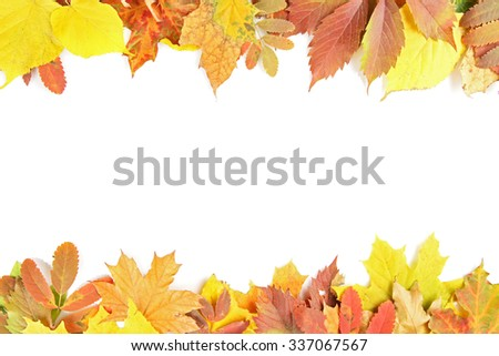 Colorful autumn leaves, isolated on white