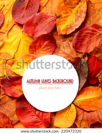 colorful autumn leaves on a white background for  text  - stock photo