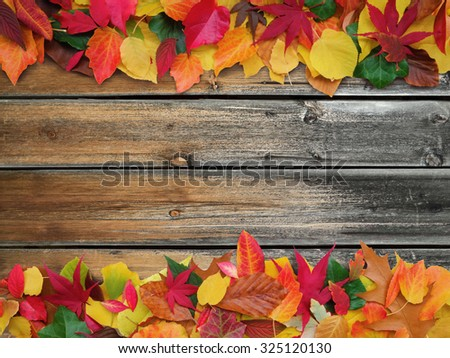 colorful autumn leaves on old weathered wooden background with copy space - stock photo