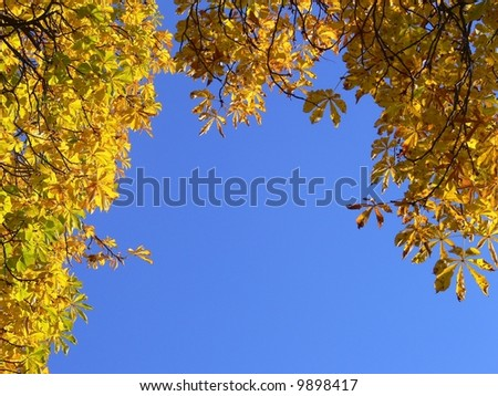 Colorful autumn leaves on sky background