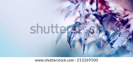 Colorful autumn leaves with drops and copy space - stock photo