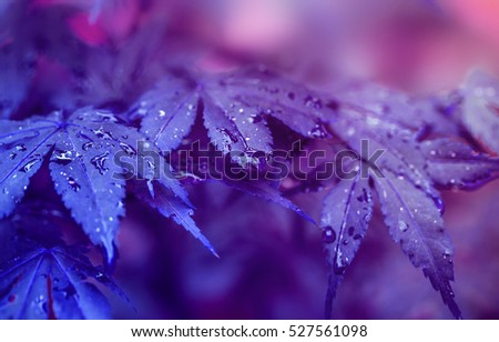 Colorful autumn leaves with purple filter