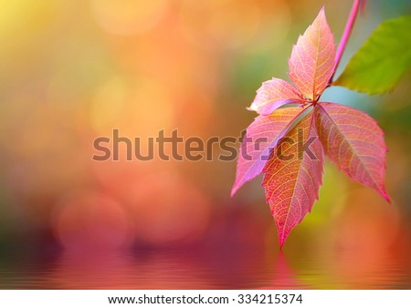 colorful autumn leaves with reflection on water. natural background - stock photo