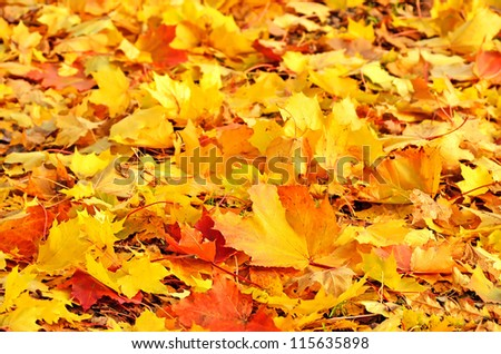 Colorful autumn maple leaves background - stock photo