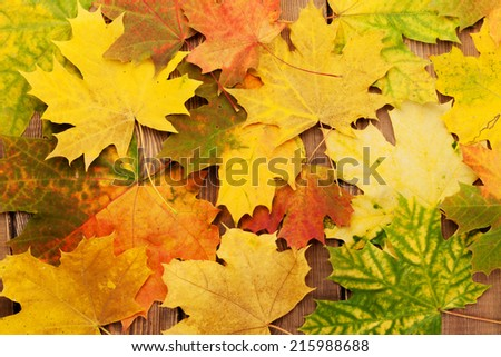 Colorful autumn maple leaves on wooden table - stock photo