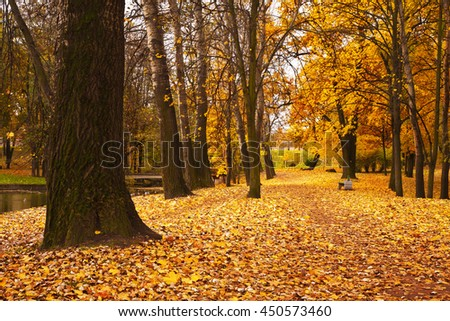 colorful autumn maple trees fallen leaves in park - stock photo