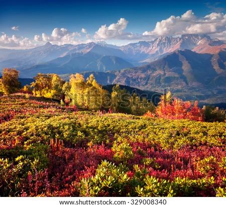Colorful autumn morning in the Caucasus mountains. Upper Svaneti, Georgia, Europe. October 2015. - stock photo