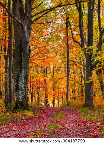 Colorful autumn morning in the mountain forest. - stock photo
