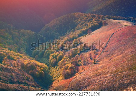 Colorful autumn morning in the mountains
