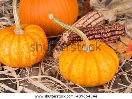 Colorful autumn pumpkins with indian corn on straw covered surface