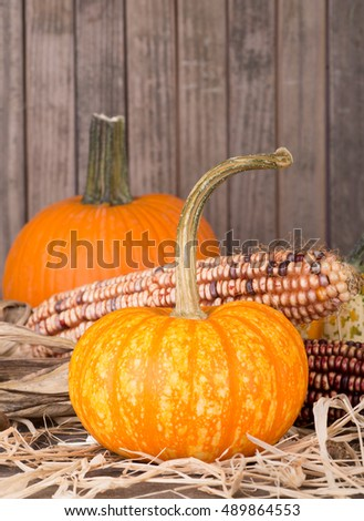 Colorful autumn pumpkins with indian corn on straw covered surface and wooden background