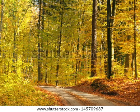 Colorful, autumn road in the forest