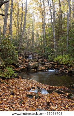 Colorful Autumn stream in Smoky Mountains National Park covered with golden leaves and lined with trees and undergrowth. - stock photo