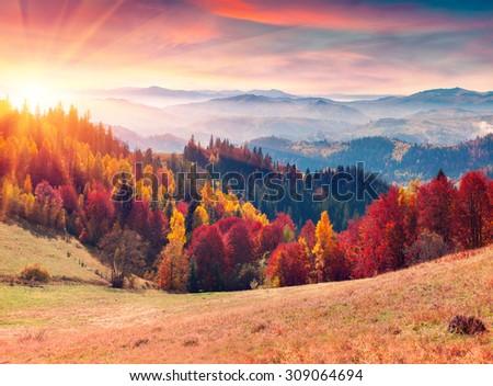 Colorful autumn sunrise in the Carpathian mountains. Sokilsky ridge, Ukraine, Europe. - stock photo
