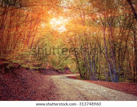 Colorful autumn sunrise in the forest with old road - stock photo