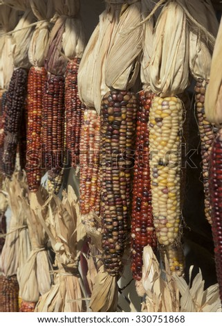 Colorful, Autumn, Thanksgiving, Halloween Indian Corn