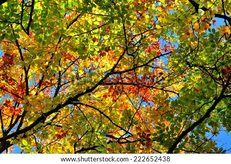 Colorful autumn tree leaves in a forest - stock photo