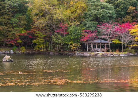 Colorful autumn Trees and Leaves in park with small lake