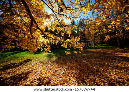 Colorful autumn trees on beautiful sunny day